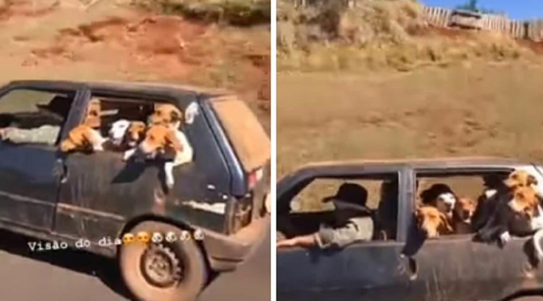 Insólito vídeo de un conductor que lleva a sus perros de rastro en un Seat Panda
