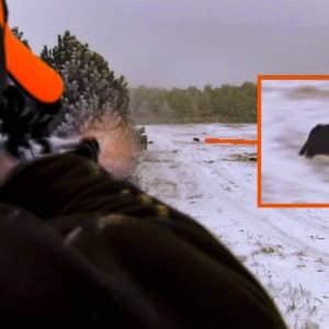Seis magistrales disparos a jabalíes en batida