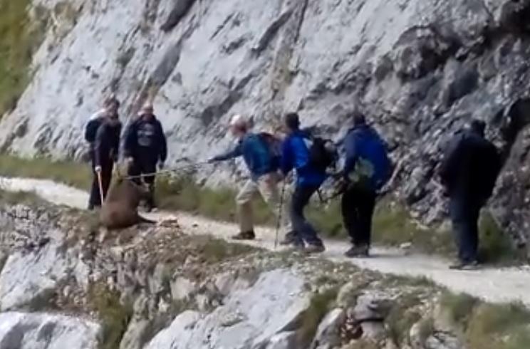 Finaliza sin éxito la identificación de los senderistas que despeñaron a un jabalí