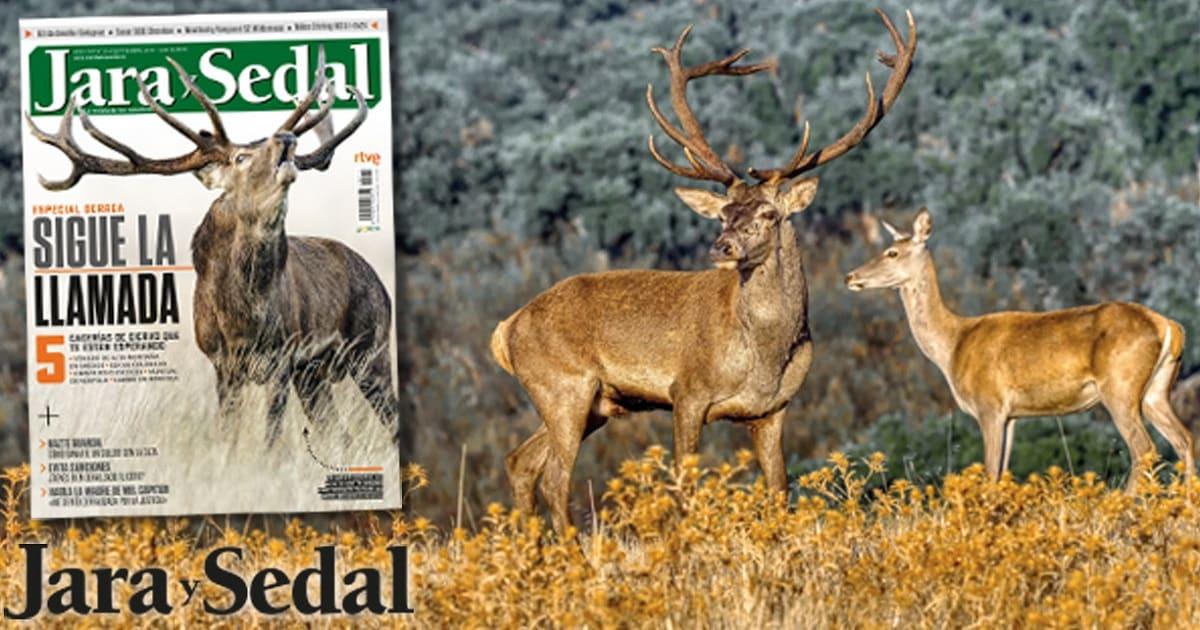 Disfruta del especial berrea en el número de septiembre de Jara y Sedal