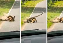 serpiente y ciervo