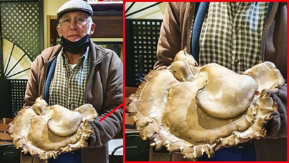 Encuentra una enorme seta de cardo de casi 3 kilos en Toledo