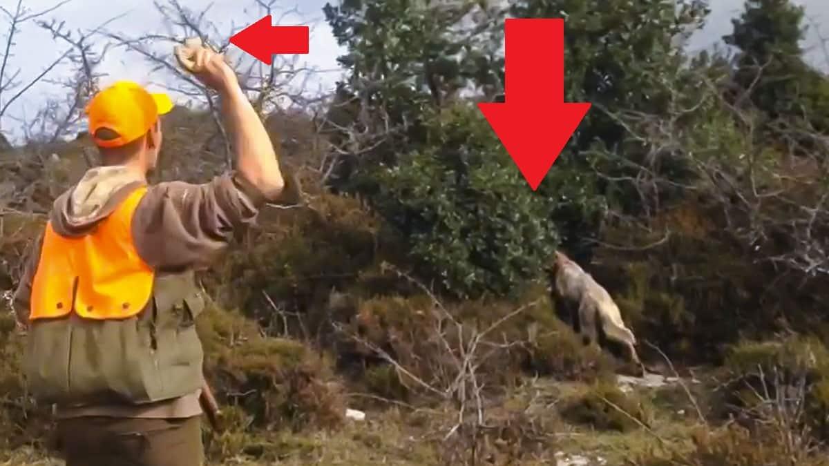 Tres setter que cazan becadas se ponen de muestra, pero sale un bicho que no esperaban
