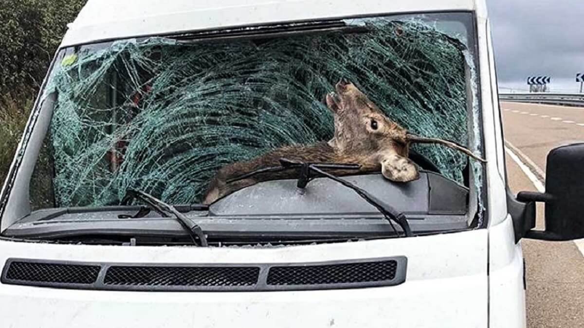 Más de 220 millones de animales salvajes mueren atropellados cada año en Europa