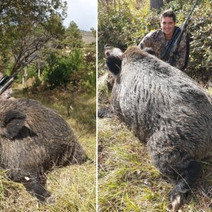 Caza el jabalí de su vida: un viejo 'monstruo' de 230 kilos