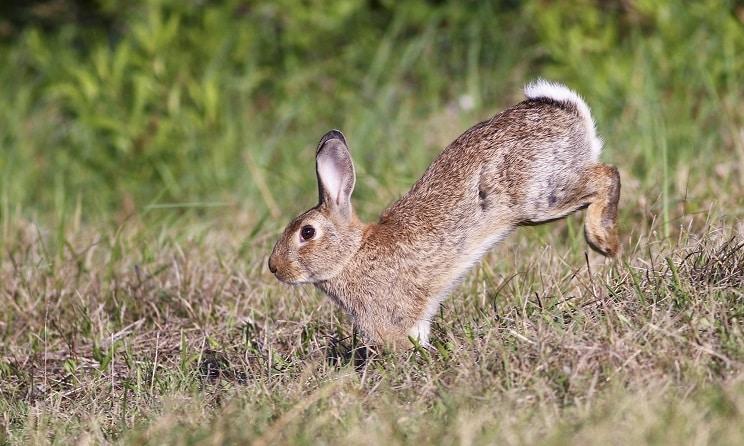 Aragón permitirá cazar conejos de noche, con foco y sin licencia