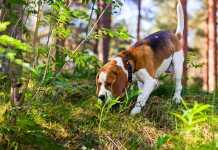 perro cogiendo un rastro