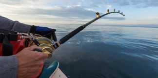 El sector pesquero como ejemplo a nivel mundial