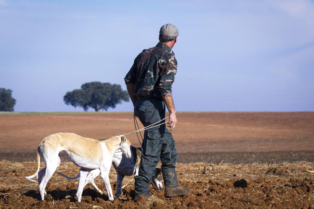 Un galguero camina con sus perros.