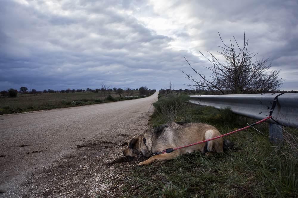 La Comunidad de Madrid multará con hasta 30.000 euros a quien abandone o maltrate a un perro