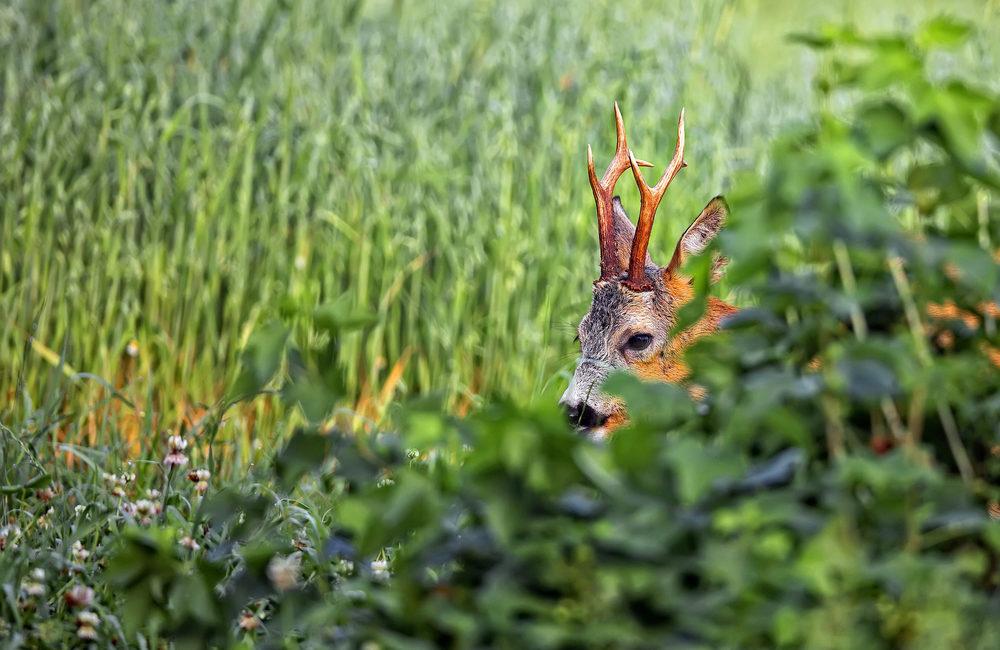 9 formas de tener un bonito recuerdo de una jornada de caza