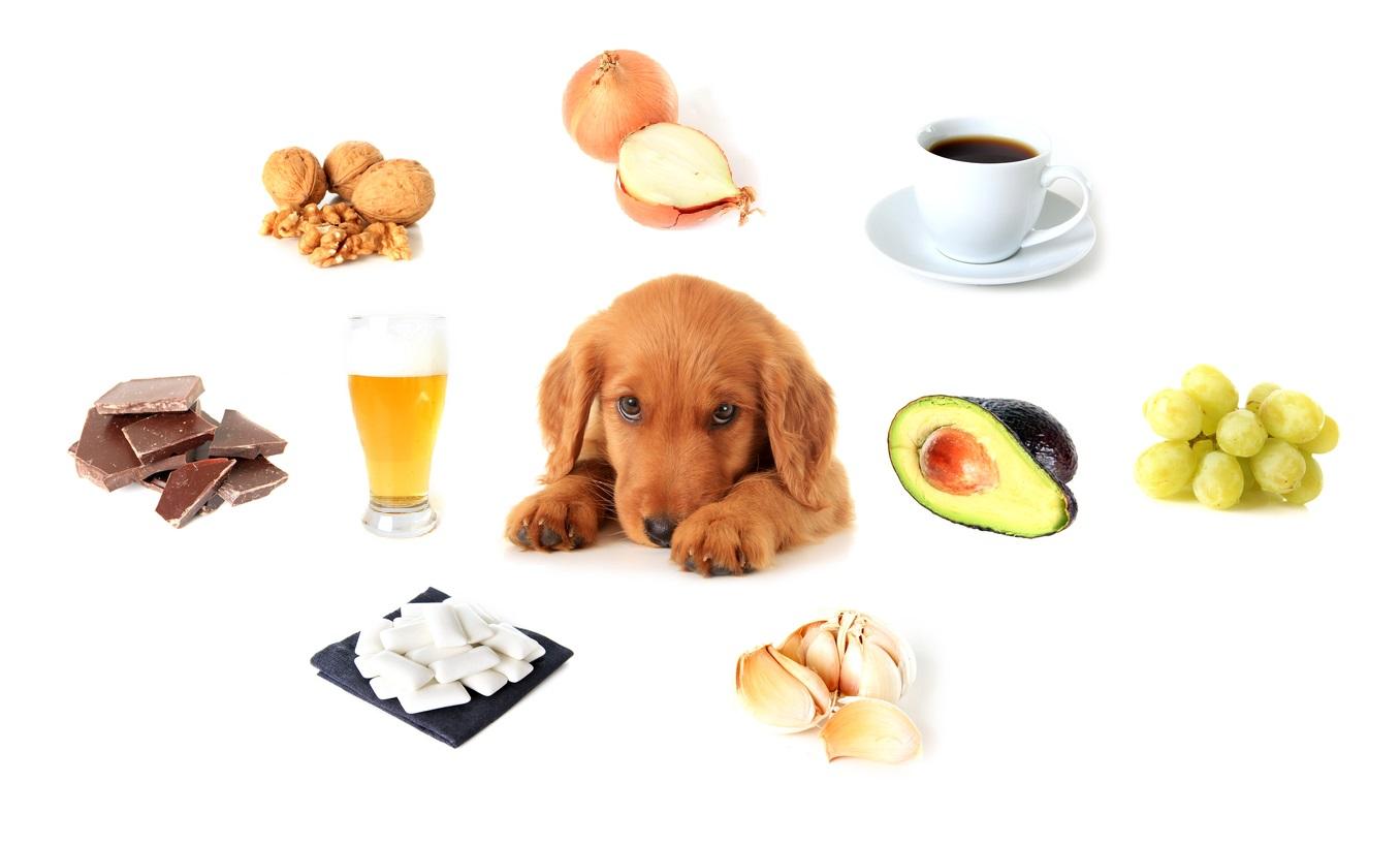 9 alimentos que jamás debes dar a tu perro