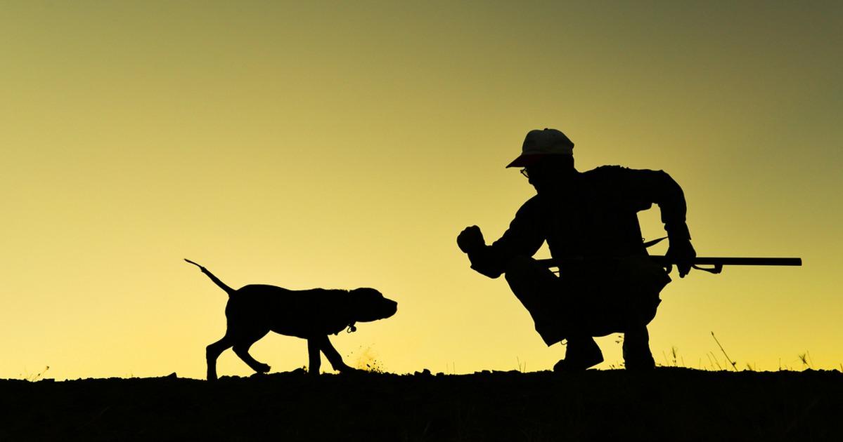 Los 30 mejores consejos sobre caza para ser un cazador completo