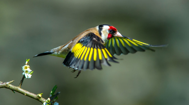 La Comisión Europea da alas al silvestrismo: abre una vía para volver a autorizarlo