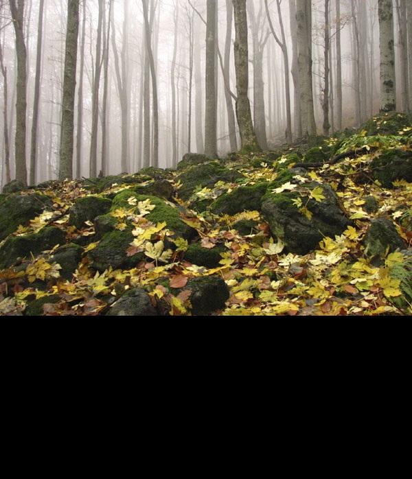 Orientación: ¿dónde está el norte en medio de un bosque?