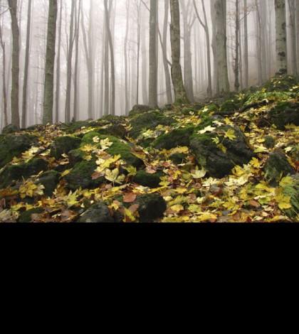 slide-bosque-hojas