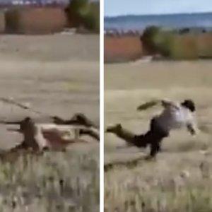 La desternillante suelta de un galguero que tropieza arrasa entre los cazadores