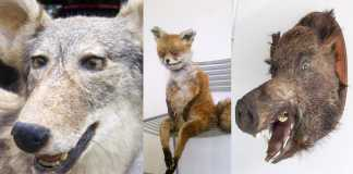 peores taxidermias