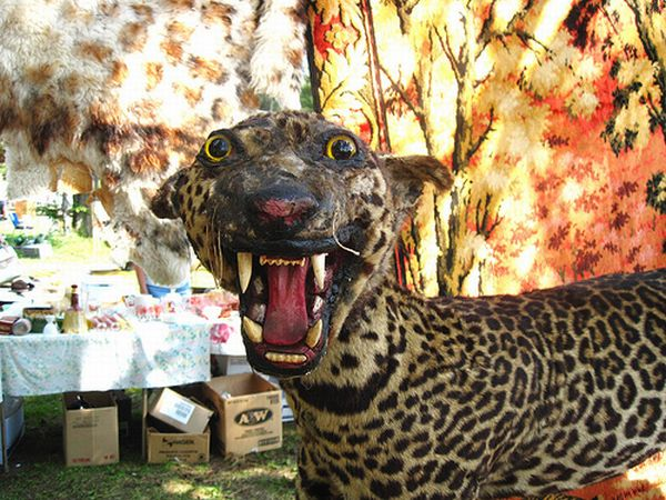 taxiderpy336220588