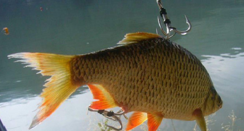 Diez técnicas de pesca prohibidas que usan los furtivos