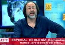 telespectador insulta lobo marley