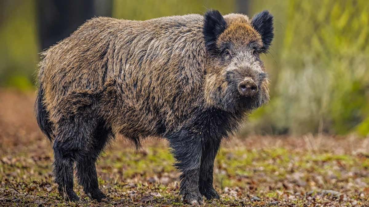 Castilla-La Mancha ampliará la temporada de caza debido al COVID