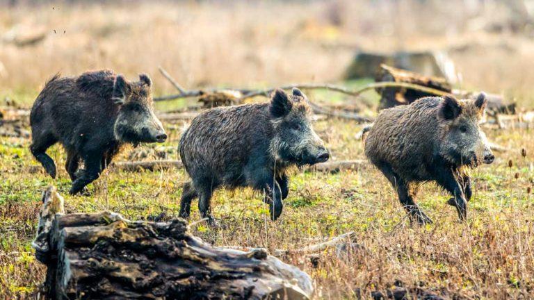 Artemisan solicita que se amplíe la temporada de caza
