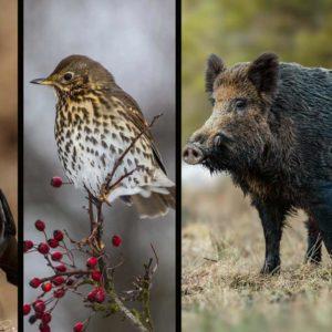 Temporada general de caza 2020/2021: fechas, especies y órdenes de vedas, comunidad por comunidad