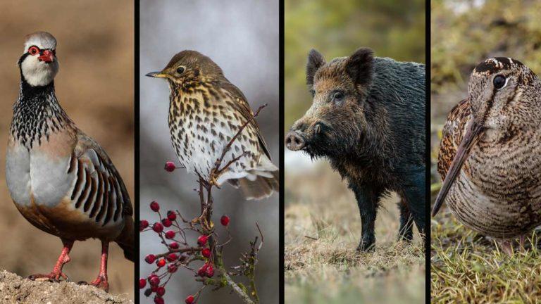 La temporada general de caza 2020/2021 arranca este mes de octubre. /Shutterstock