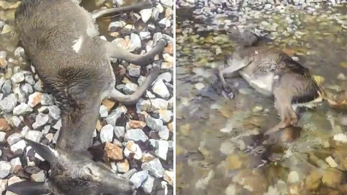 Un cazador graba las «terribles consecuencias» de Filomena para la fauna en Palencia