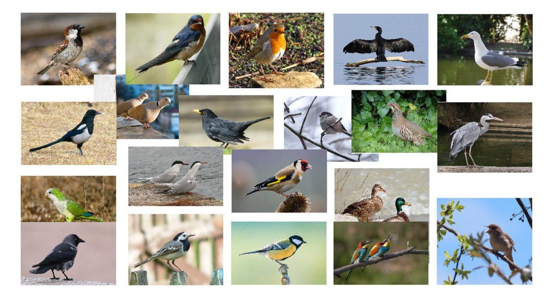 Ponte a prueba con este test para diferenciar las aves españolas