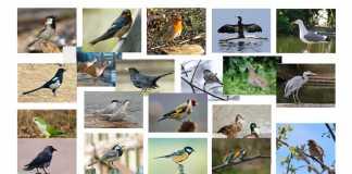 test-aves