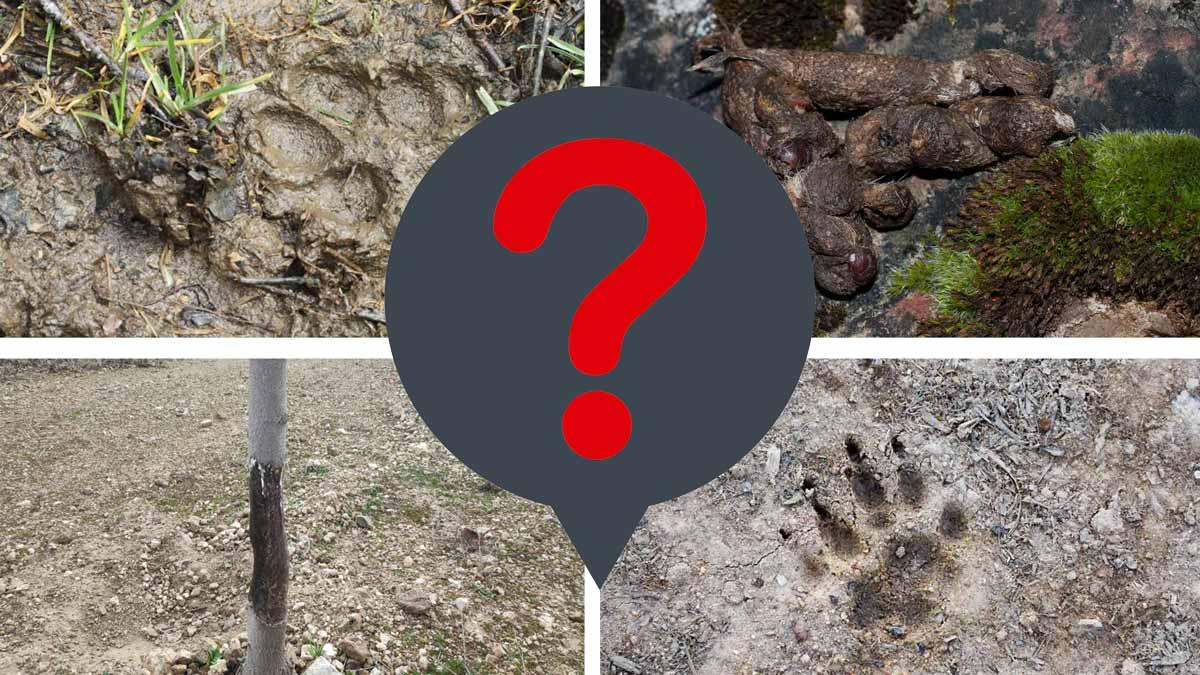 Test para cazadores (o no): ¿A qué animal pertenecen estos rastros?