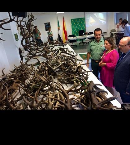 Desmantelado en Cáceres un grupo que traficaba con trofeos de caza