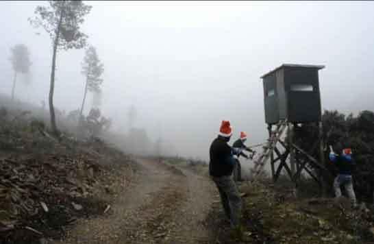 Lobo Marley destruye tres cabañas usadas para cazar lobos en la Sierra de La Culebra
