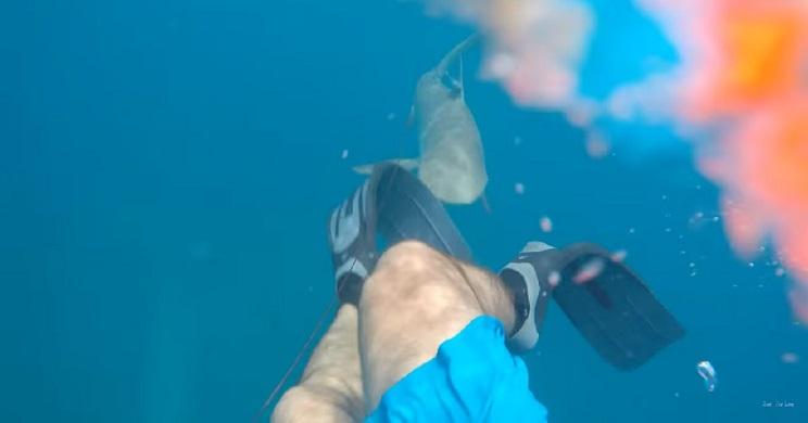 Un tiburón ataca a un hombre que practicaba pesca submarina