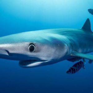 Pánico en una playa de Torremolinos tras avistar un tiburón