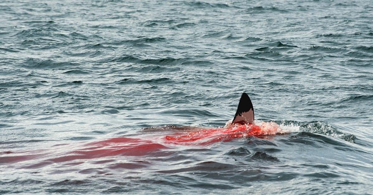 Un tiburón mata a un joven francés