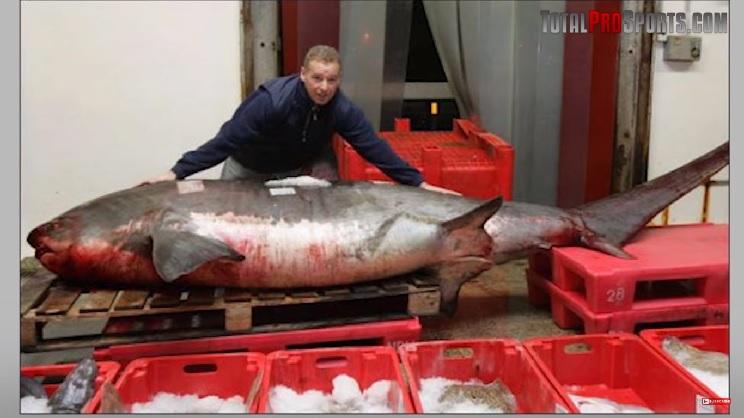 tiburon azotador