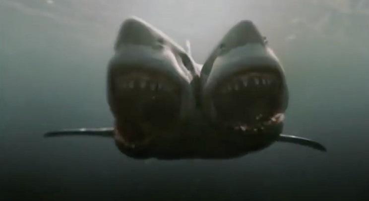 tiburon-de-dos-cabezas