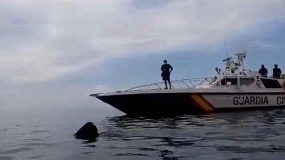Este es el vídeo de un tiburón de ocho metros grabado por la Guardia Civil en Granada