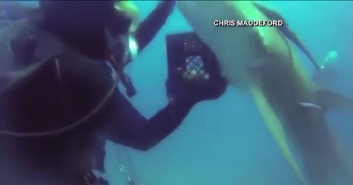 Las redes arden con las imágenes de un tiburón herido y la reacción de este buceador