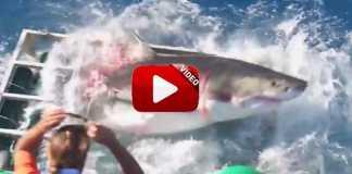 tiburon-jaula-buzo