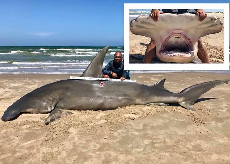 Un pescador captura un tiburón martillo de más de cuatro metros con su caña