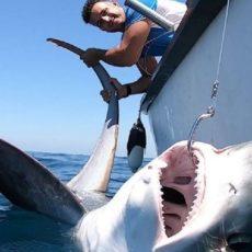 Capturan un tiburón zorro de 50 kilos en aguas de Punta Umbría