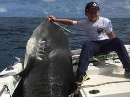 niño tiburón