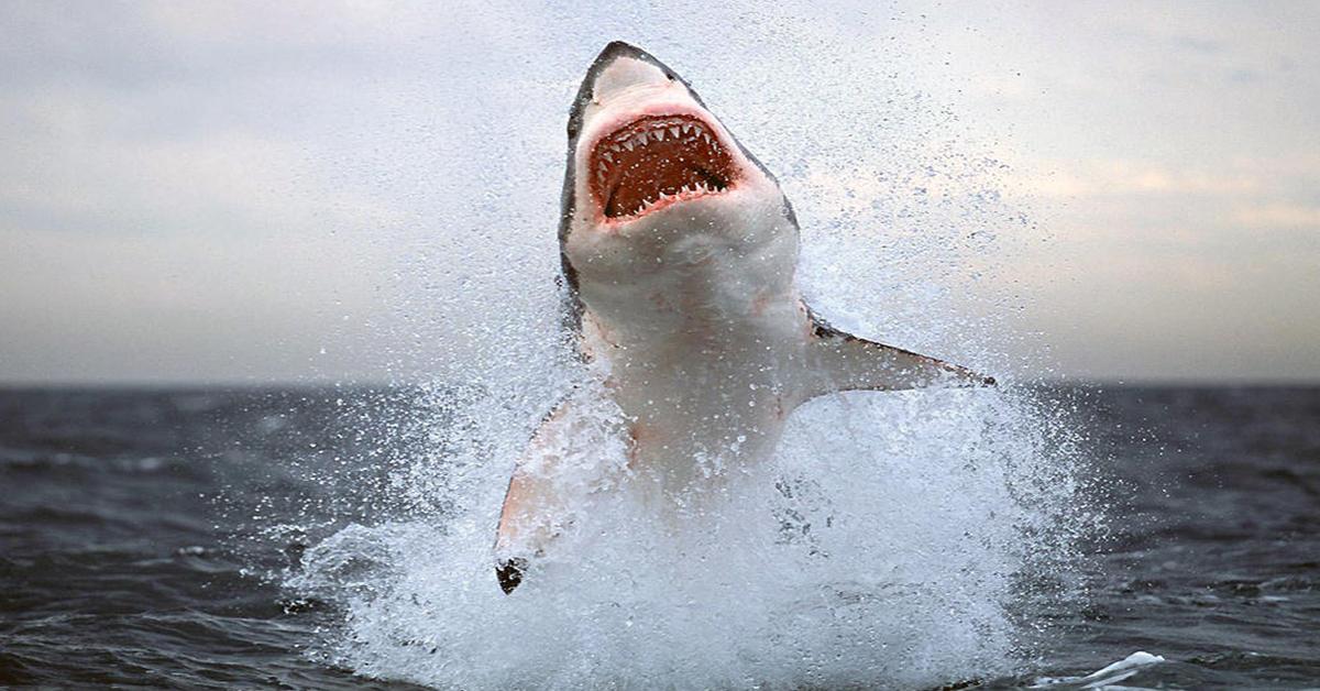 Los 11 tiburones más grandes jamás capturados