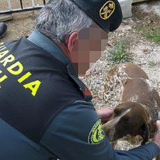 Investigados seis toledanos que robaron perros de caza en Salamanca y capturaron erizos