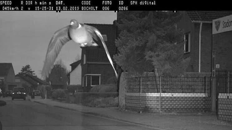 Un radar 'caza' a una torcaz y la foto se hace viral