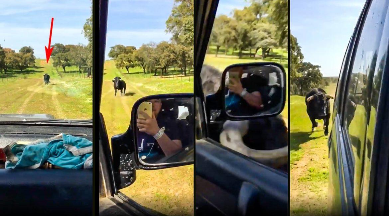 Un toro bravo de 500 kilos cabreado embiste contra un 4×4 en un camino sin salida